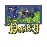 daisy526