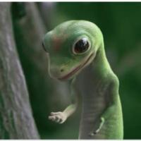 geckofiend